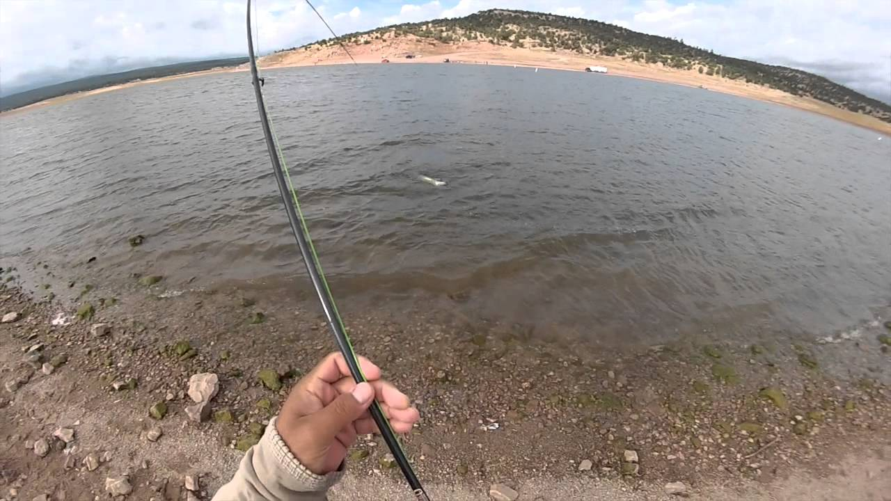 Tiger muskie fly fishing bluewater lake nm youtube for Mexico fishing license