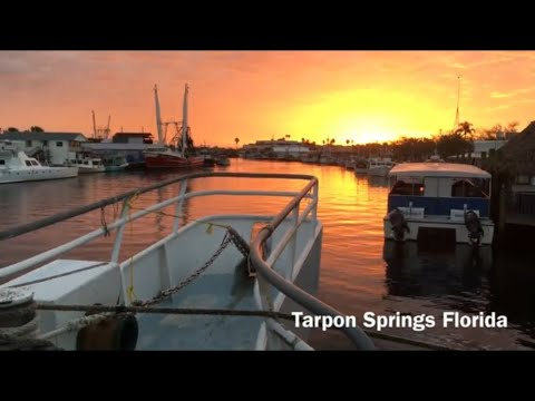 DOLPHIN DEEP SEA FISHING CHARTER ADVENTURE -Tarpon Springs Florida And BOAT RIDE On 85' Two-Georges