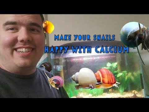 An Inexpensive Way To Add Calcium To Your Tank.