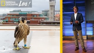 Adventures in Photographing England's Urban Wildlife | Nat Geo Live