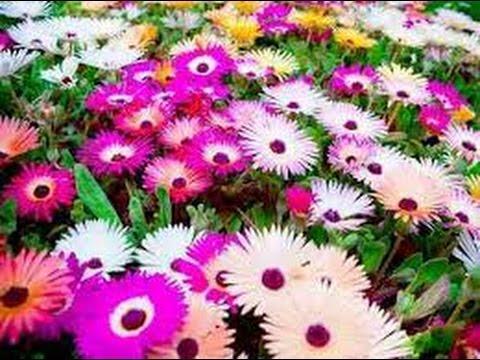 Flores E Paisagens Lindíssimas Com Músicas Clássica