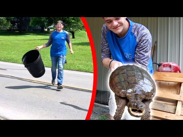 RESCUING SNAPPING TURTLE OFF BUSY HIGHWAY!!!