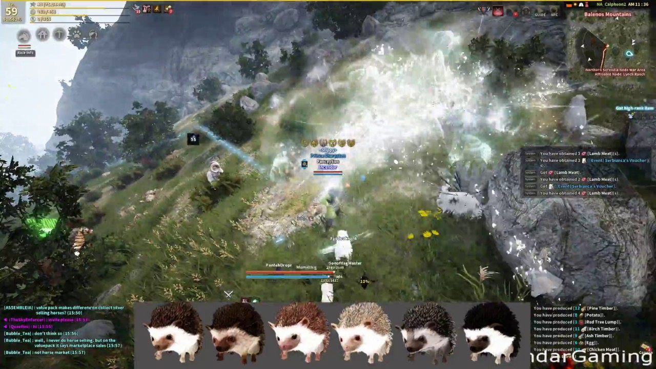 BDO Hedgehog pet information how to use and is it worth it