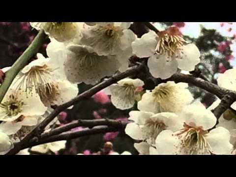 Romantic Area Kyoto 京の都ぶらぶら放浪記:「京の春を探して」城南宮(京都府京都市伏見区中島鳥羽離宮町7)