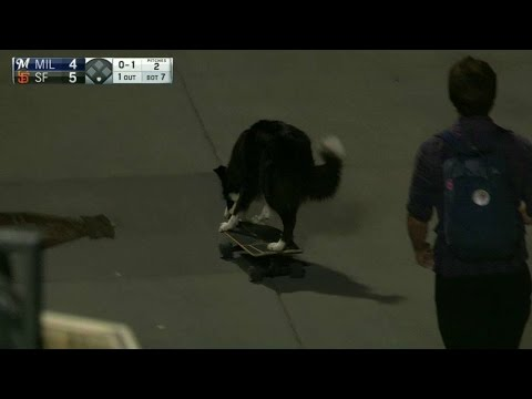 Skateboarding dog at the Giants game