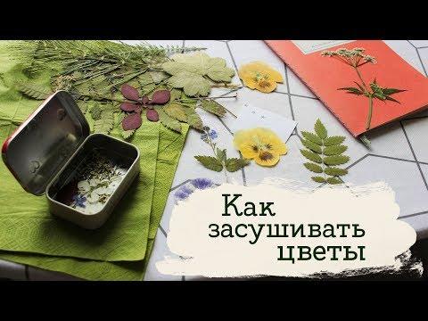 Как сушить цветы в книге