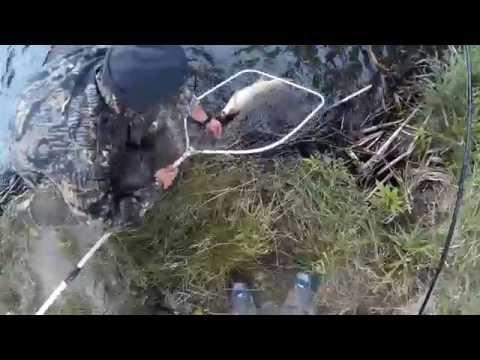 самодельные бойлы для ловли амура