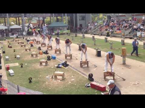 325mm Sydney Royal Easter Show Championship Underhand FINAL