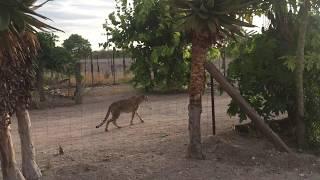 Деревня в Намибии Леопарды