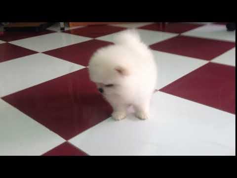 New born white dog