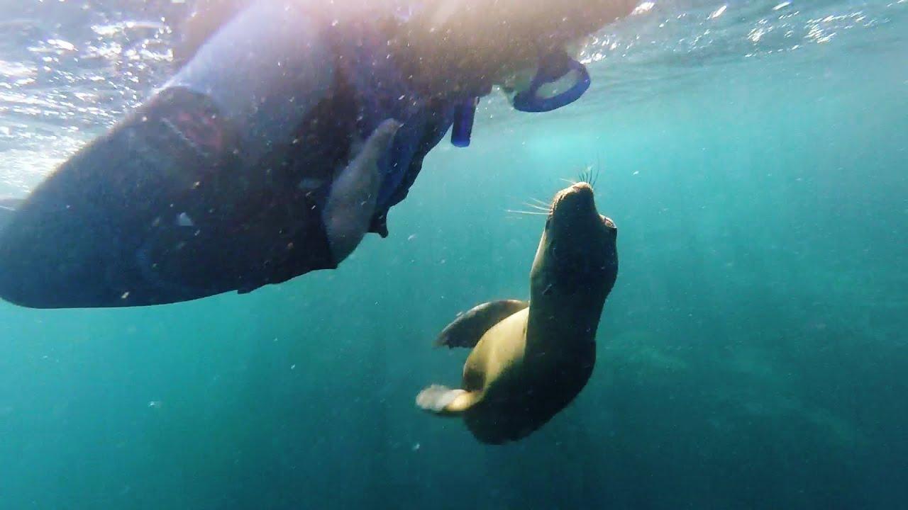 Nadando con lobos marinos, Isla Espíritu Santo