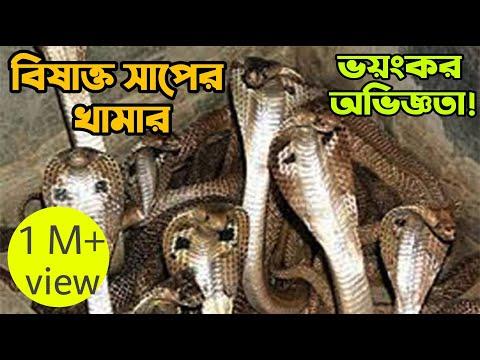 সাপের খামার, রাজশাহী। বিষাক্ত ও বিরল সাপের রাজ্য। Snake Farm, Rajshahi.