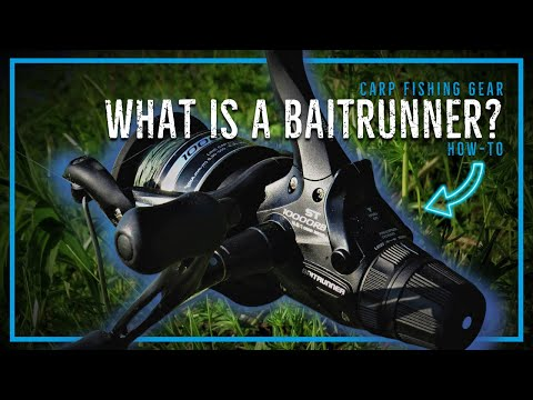 What Is A Baitrunner Reel For Carp Fishing?