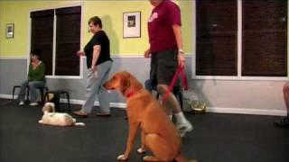 Jabula Dog Academy - Stage 1