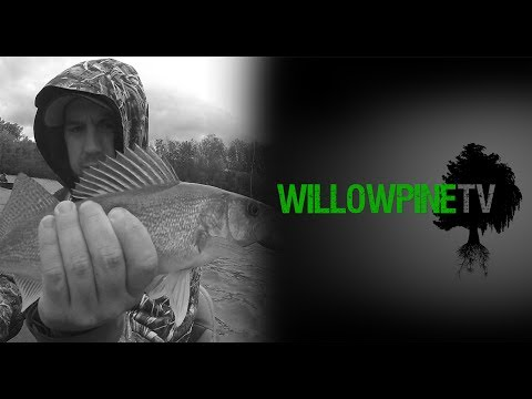 Indiana Walleye Fishing At Brookville Lake By Willowpine Outdoors