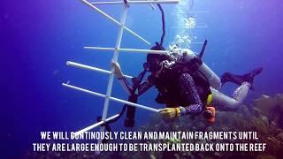 Utila Coral Reef Restoration Ecology Project - Utila Dive Centre