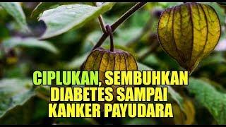 6 Makanan yang Harus Dihindari Penderita Diabetes | dr. Vania Utami.