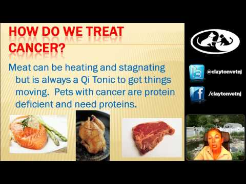 Cancer and Pet Foods with Dr. Morgan-Webinar 12