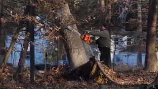 BILL MARSH BEST TREE CUTTER IN CONNECTICUT (203)300-5868