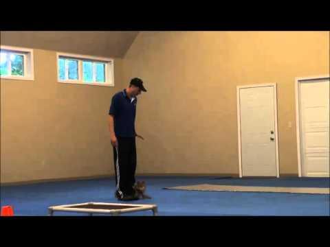 tonka-(shiba-inu)-boot-camp-dog-training-video