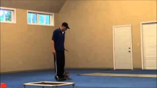 Tonka (Shiba-Inu) Boot Camp Dog Training Video