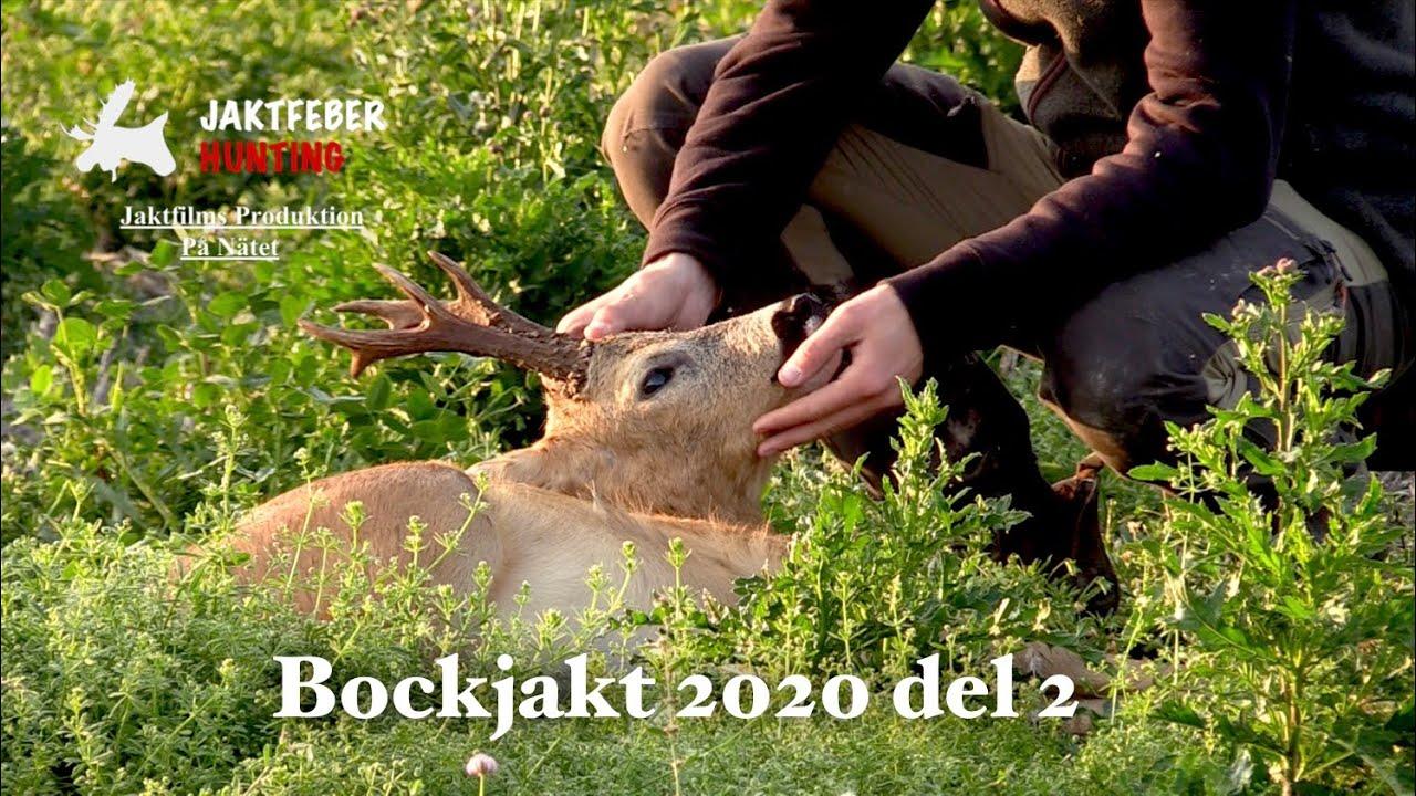 """""""Den Magiska Bocken & Räven"""" (Jaktfeber Bockjakt 2020 Del 2)"""