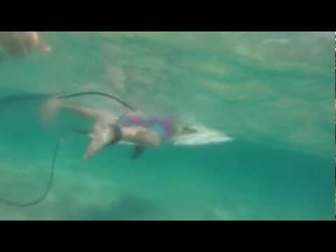 Bro surf