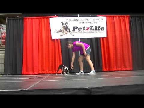Phoenix Pet Expo Talent contest!!