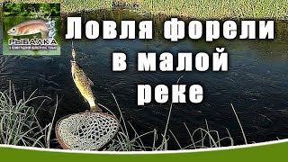 Ловля форели в малой реке. Рыбалка в Ленинградской области. (ИЮНЬ 2019)