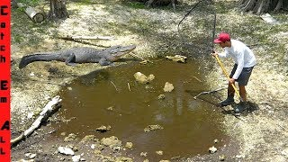 1000s of FISH TRAPPED in EVERGLADES DRY Season MUD PUDDLES!