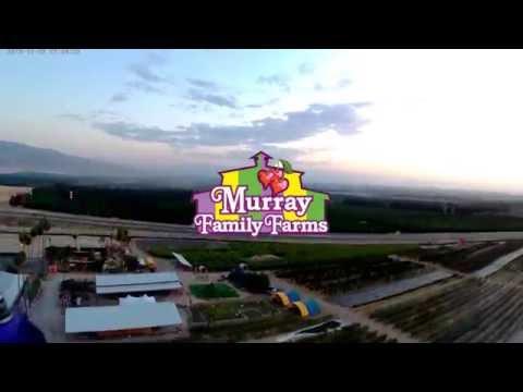 Murray Family Farms 2016 Corn Maze!