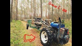 Zrywka drewna ursusem c 308/ Samowyrób opału czyli DZIK w swoim żywiole