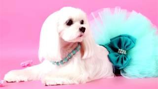 Дешевая одежда для собак интернет магазин! Одежда для собак!