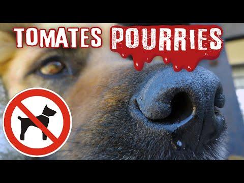 🍅 Les CHIENS sont-ils INUTILES ?! Tomates Pourries !