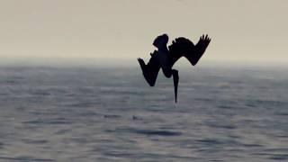 Koniec dzieciństwa - metafora tonącego statku || Stefan Molyneux