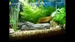 my new fishtank aqua one 850