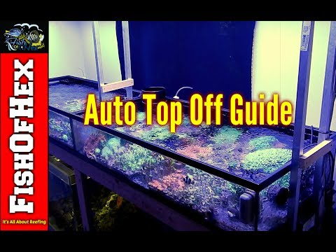 Auto Top Off Guide For Beginners