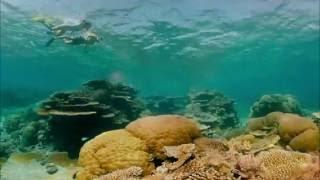 Great Barrier Reef, Queensland, Australia 360 VR