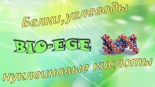 Bio-ege | Урок №3 Белки, липиды. углеводы. нуклеиновые кислоты готовимся к ЕГЭ биология