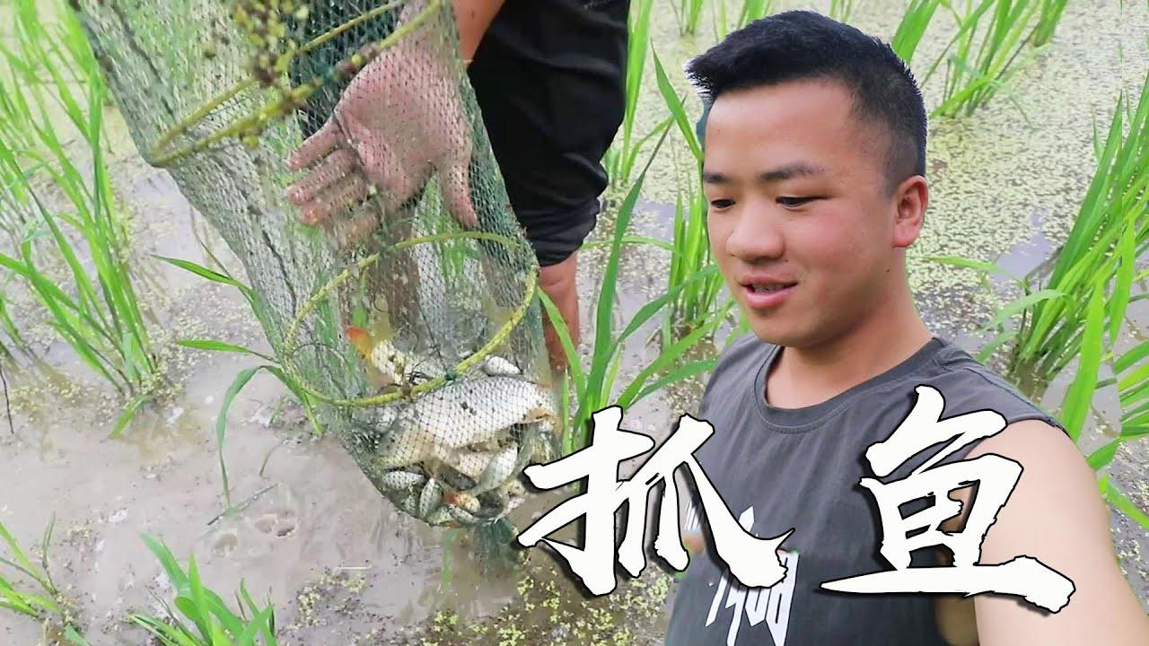 农村小伙抓了120条鲤鱼,直接拿到稻田里放养,长大了再吃【农村小野】