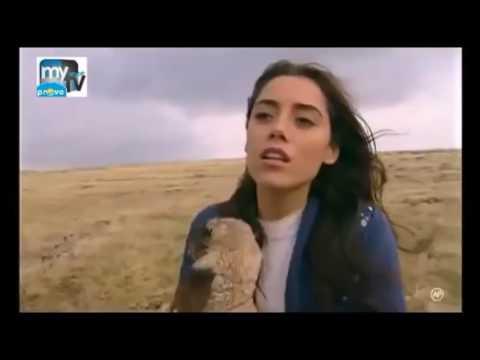 Gul Mardin 8