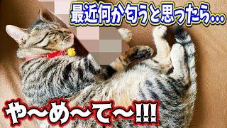 愛猫テトの頭が最近何か匂うと思ってたら...や〜め〜て〜!!!