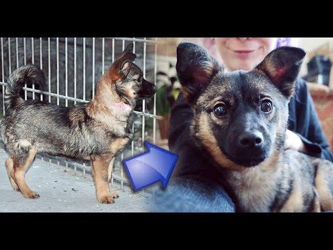 Ein Welpe aus Rumänien - Straßenhund goes Herzensbrecher!