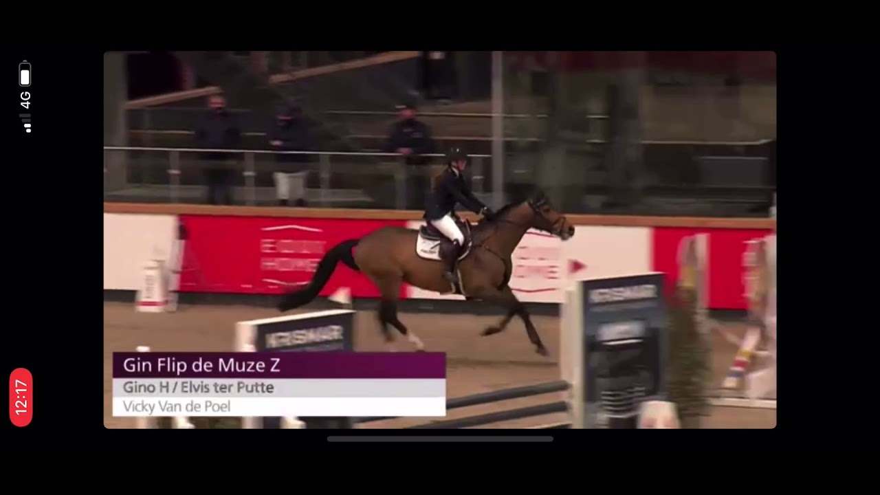 Gin Flip de Muze Z - 4yo Stallion Competition Sentower Park 22/2