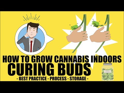 Curing Cannabis Properly - How to grow marijuana course for dummies - Growing Cannabis Indoors 101