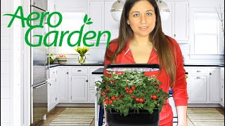 AeroGarden Review | Testing Cool Kitchen Gadgets