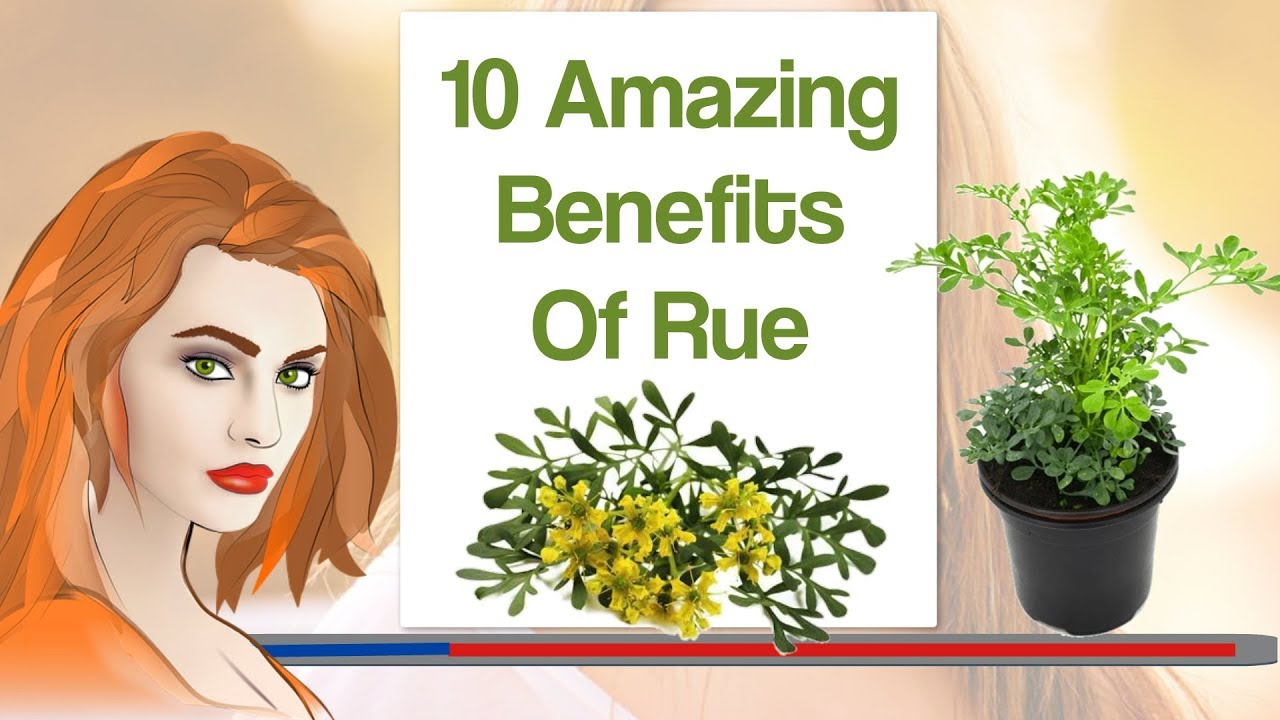 Download 10 Amazing Benefits Of Rue