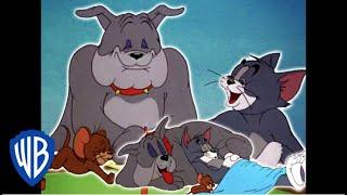 Tom y Jerry en Español Latino America | El triángulo de la amistad | WB Kids