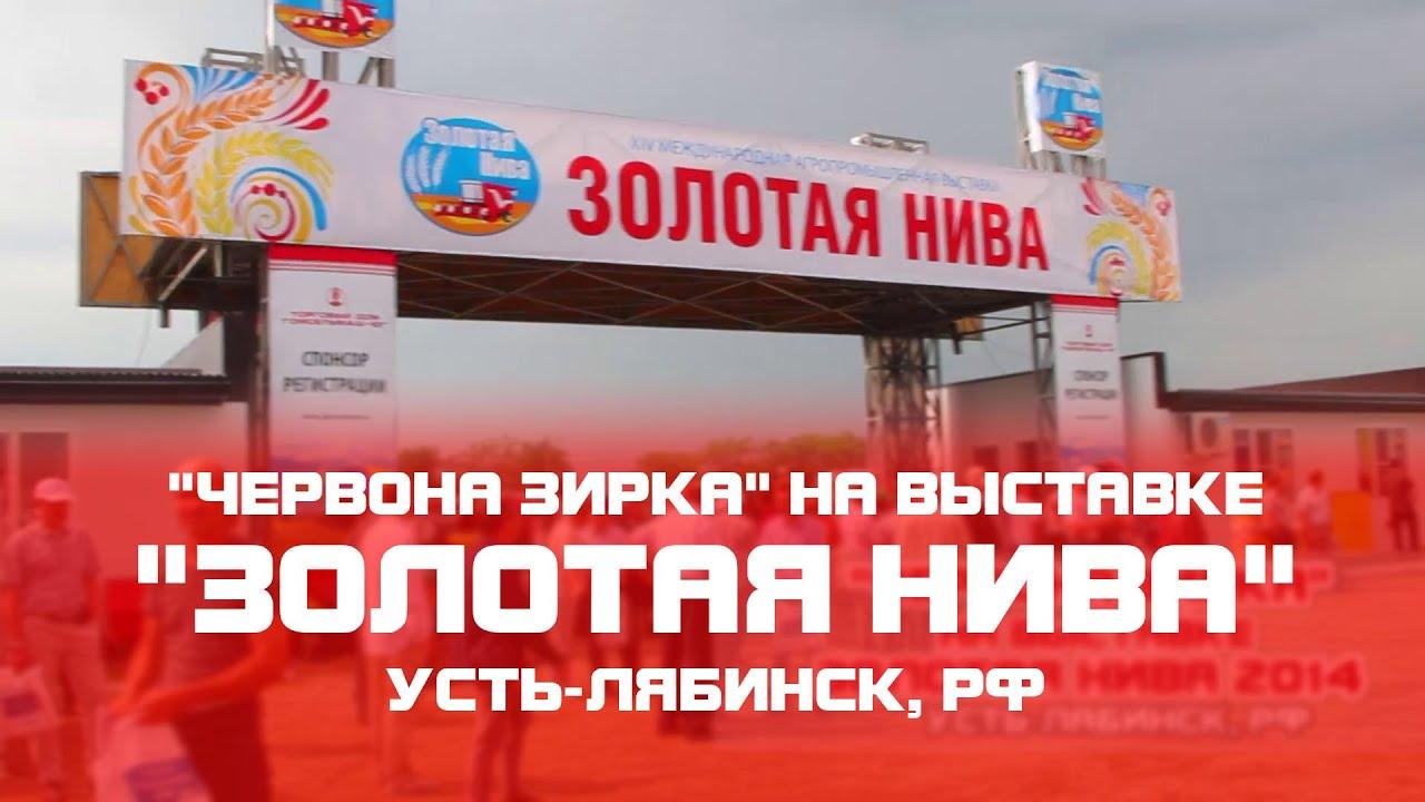 Проститутки метро золотая нива Рабин
