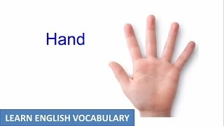 Hand And Arm | Human Body Parts | Learn English Vocabulary